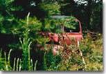 Des photos qui magnifient les épaves de voitures piégées par la nature