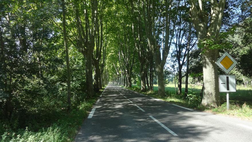 Bac sans internet S0-Securite-routiere-abattage-de-platanes-la-guerre-est-declaree-347987