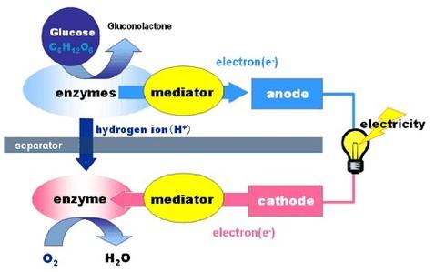 Sony : comment ses bio-piles transforment le sucre en électricité !