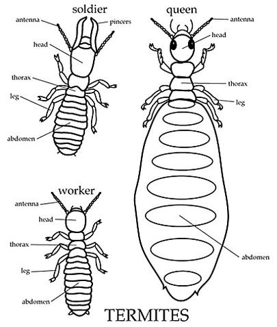 Quel est le lien entre les termites et les agrocarburants ?