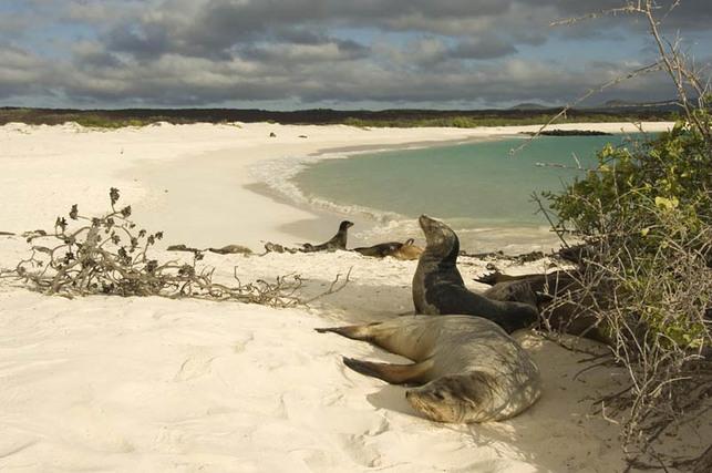 Îles Galapagos/Tourisme : les combustibles polluants interdits d'ici 2015