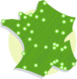 Elections municipales 2008 : Greenpeace France veille au grain ! Serez-vous un maire éco-responsable ?