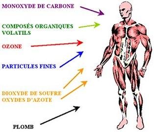Crises cardiaques/Pollution auto : un des responsables, les hydrocarbures polycycliques aromatisés
