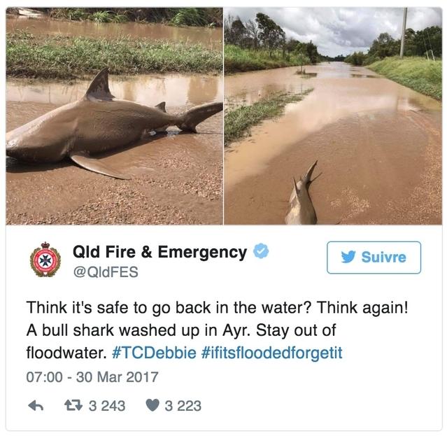 Insolite : un requin échoué sur la route en Australie