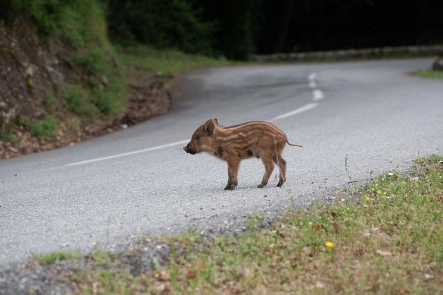 Comment suis-je assuré lors d'un accident avec un animal ?
