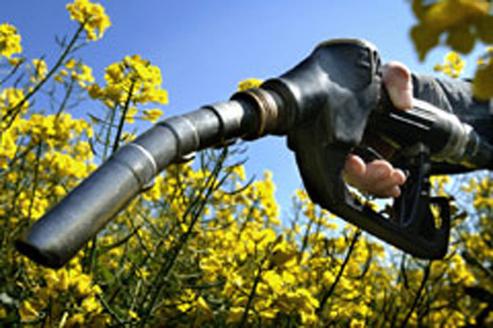 Guide d'achat biodiesel : un potentiel en stand-by