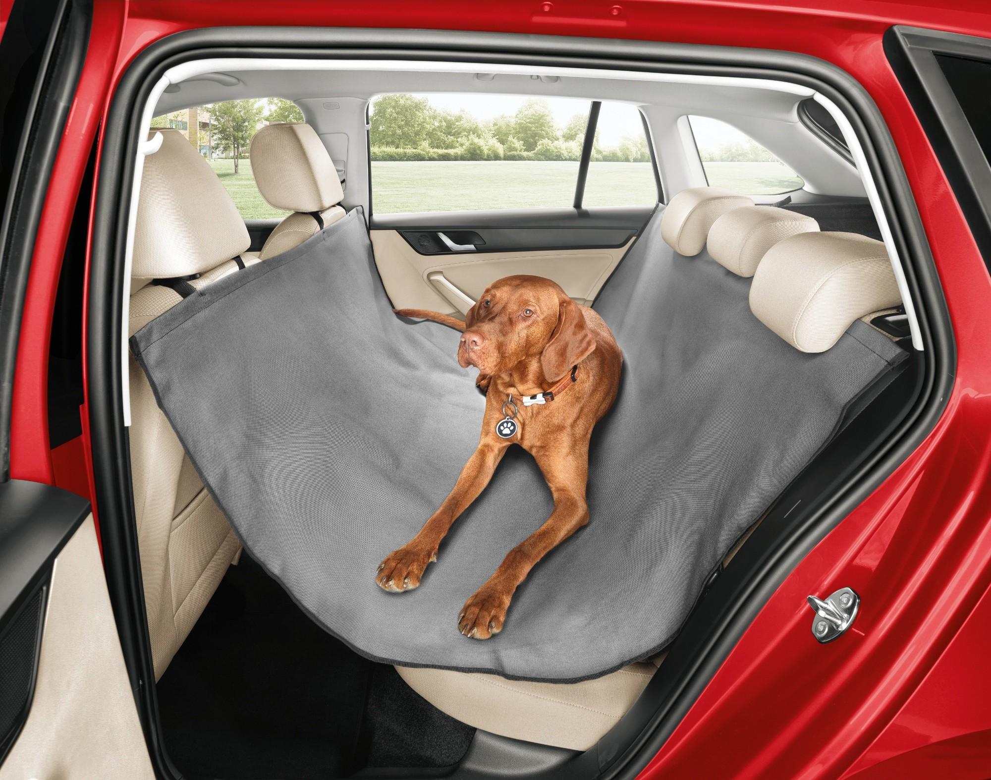 skoda propose des nouveaux accessoires dont une ceinture pour chien. Black Bedroom Furniture Sets. Home Design Ideas