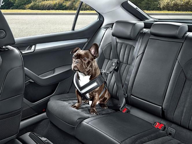 Skoda propose des nouveaux accessoires dont une ceinture pour chien