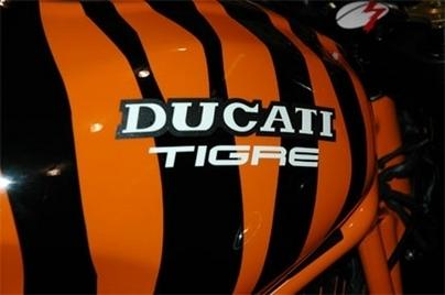 Nos amis les bêtes : Ducati Tigre