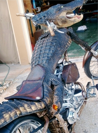 Nos amis les bêtes : Harley Davidson crocodile