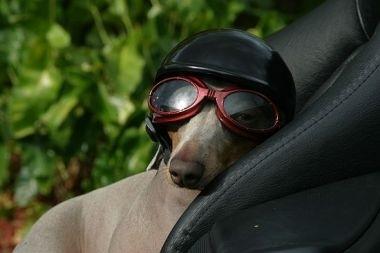 Le gadget du jour : casque pour chien.