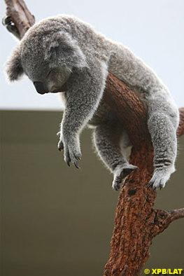 Formule 1 - Australie: Melbourne confirmé jusqu'en 2015