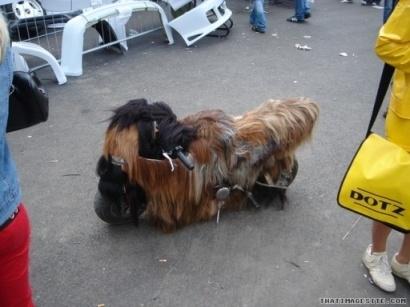 La photo du jour : une pocket ou un chien