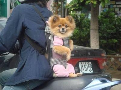 Photo du jour : Biker dog