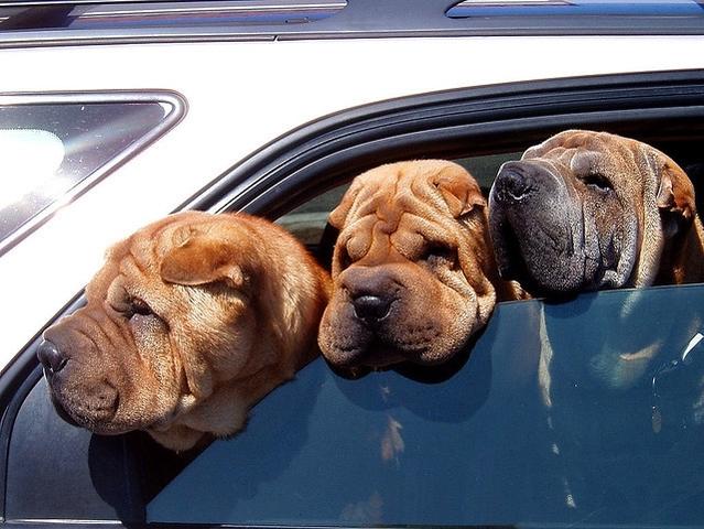En Floride, briser les vitres d'un véhicule pour secourir un animal est désormais légal