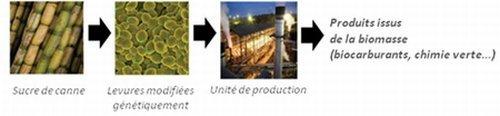 Le pétrolier Total se consacre au développement de biocarburants de 2e génération