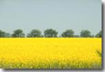 Bioéthanol : Avenir concret ou poudre aux yeux ?