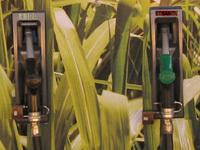 Rapport : les emplois verts vont se développer pour lutter contre la pollution
