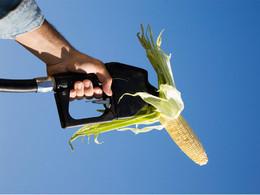 Une nouvelle étude européenne sur les agrocarburants vient confirmer les craintes des écologistes