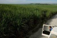 Brésil : l'éthanol doit devenir moins polluant