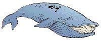 Réformes du permis de conduire: De quoi rire comme une baleine !