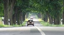 Sécurité routière: les arbres sur le bord des routes vont faire débat