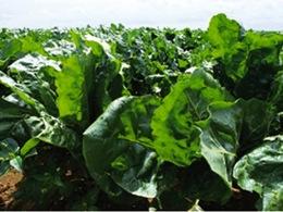 Le développement du bioéthanol, une «priorité environnementale» pour 74% des Français