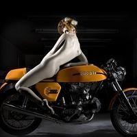 Moto § Sexy - Ducati: Borgo Panigale a justement demandé du rab à Elizabeth