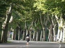 Sécurité routière: le débat sur les arbres s'enracine