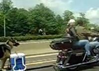 Vidéo moto : remorque à chien