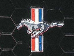 Les Mustang polonaises en vidéo