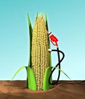 Vocabulaire des carburants issus de l'agriculture : parlons peu mais bien !
