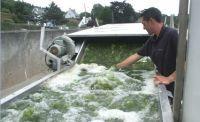Une auto fonctionnant aux algues vertes grâce au projet Morgane de OLMIX