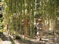 La biodiversité en danger à cause des plantes destinées aux agrocarburants