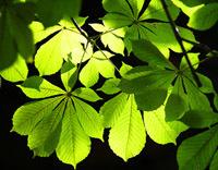 Natureparif : bienvenue à la première structure régionale consacrée à la biodiversité