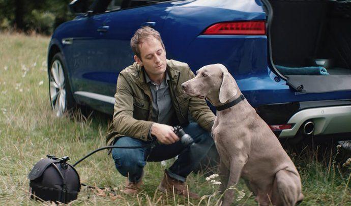 Insolite - Jaguar: quand le félin pense aux chiens.
