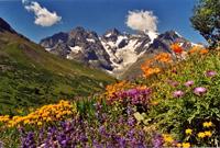 Changement climatique : les plantes migrent en altitude pour échapper à la chaleur…