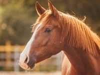 Son permis suspendu, il va à la gendarmerie à cheval
