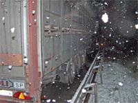 Transports d'animaux sur route : la Suisse dénonce de nombreuses infractions