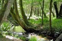 Reforestation au Mexique : encore une opération « Greenwashing » ?