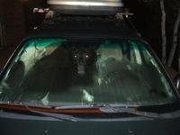 Car-jacking : le malfrat était un ours