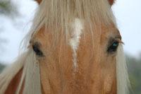 Beauvais : des chevaux pour remplacer le camion-poubelle