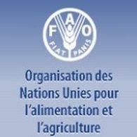 Pour la FAO, les biocarburants présentent opportunités et risques