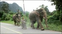 Thaïlande : des éléphants attaquent les camions sur la route