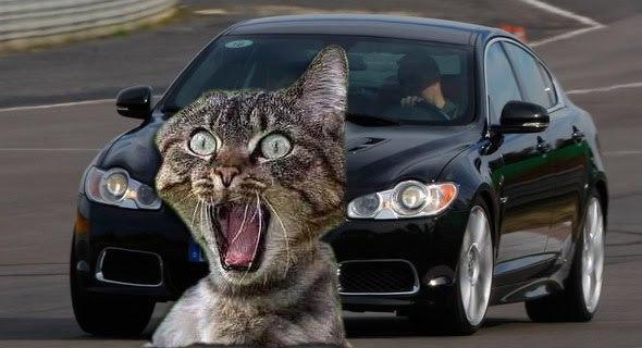 Jaguar décide de ne pas envoyer sa XFR défier la Cadillac CTS-V. Mercedes, Audi et BMW déclinent également l'invitation