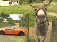 Insolite : un âne confond une McLaren orange avec une carotte