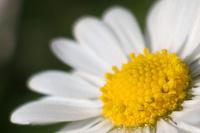 Allemagne : quand la ville s'occupe de la biodiversité végétale
