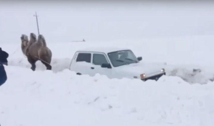 Il utilise son chameau pour sortir sa voiture de la neige