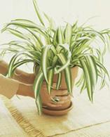 Dossier spécial : dépolluer son intérieur par les plantes