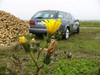 Midi Pile - GPL, GNV, hybrides et flexfuel : des ventes encore anecdotiques